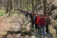 Šetnja kroz šumu